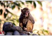一隻小猴子下山遇險(管理者必讀)