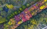 航拍南京明孝陵石象路,秋景迷人構成一幅美麗的五彩秋色畫卷