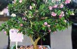 最耐養的幾種家居植物花卉,家裡光照不好也不怕養死了