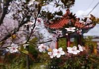 用七種方法治療春季呼吸道疾病