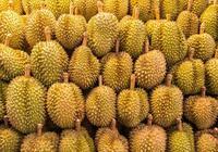 水果之王是榴蓮,水果之後是誰?