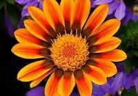 我們一鉤花就停不下來,因為太美了,附44種花朵的鉤織教程