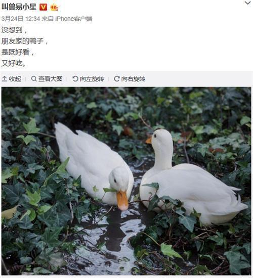 王思聰的動物園可以開張了