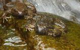 動物圖集:石蛙