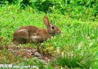 寵物兔子價格貴嗎?如何挑選一隻健康的兔子?