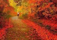深秋的風,吹痛思念的愁