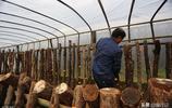 """見過金色的木耳嗎?陝西大山裡的村民種這個""""點木成金""""年入百萬"""