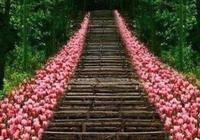 心理測試:四條鮮花樓梯,你會走哪條?測你能不能遇見更好的人?