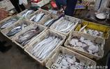 海鮮品種齊全 偏口、鼓眼、麵包魚都是15元一斤 小黃花10元一斤