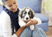覺得狗狗不夠聰明?和它玩這些遊戲,快速提升狗狗智商