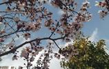 攝影:昆明——花開荼蘼