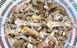 最後出海的小漁船帶回鮮活海鮮 雜魚60元一斤 大安康魚10元一斤