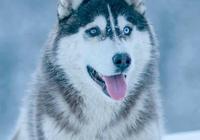 狗狗一定不會記恨主人嗎?如果狗狗有這四種行為,寵主要好好反思