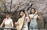 山東鄒平:櫻花 美女和春天