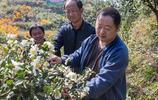 大山裡生長一高級食用油植物,國際上重點推廣,家家晒果成風景