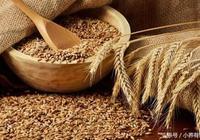 主食中的營養冠軍,竟然沒有白米、小麥