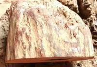一塊木頭很值錢,你見過是什麼樣的嗎?