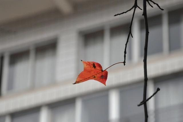 清晨落葉美如畫