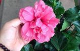 這6種花越賤養越瘋長,長得不好就是你澆水太勤快了!