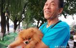 一位北京大爺離開狗狗去南京,14歲的博美髮瘋了,結局讓人感動