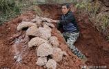 滅蟻人員大壩挖掘蟻道20多米,活捉43對蟻王蟻后,蟻齡最長30年