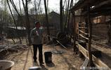 皋落72歲大爺養60只羊賣了五萬多,他卻說不養羊了只養土蜂,為啥