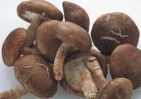真菌香菇有什麼作用