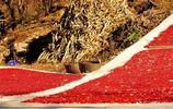 陝西太白縣的豐收季 滿山的山茱萸都紅了