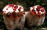 """看起來像""""草莓奶油蛋糕"""",遊客想嚐嚐卻被導遊拉住了"""