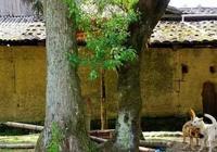 這個美麗的寧德村落,宛如水墨畫景,還擁有南國大草原~