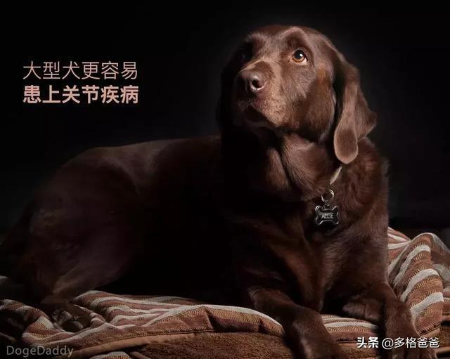 下一個狗年,它還會在嗎?狗狗的壽命究竟有多長