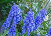 60多種鮮花,總有一款是你喜歡的,太美了,快分享給朋友吧!