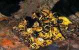 水溝挖出一個罐子,發現千年寶藏,專家一萬元收走,如今價值10億