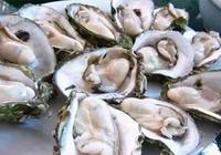 牡蠣的功效與作用,特別對男人有奇效