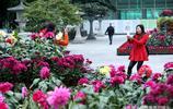 西安興慶公園大麗花、菊花展 吸引民眾賞花拍照