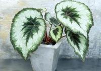 這六種植物放衛生間,比排氣扇效果更好,空氣悄悄變清新