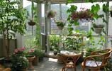 如果你家有陽臺,一定種下圖盆栽,真是美呆了,現在知道還不晚
