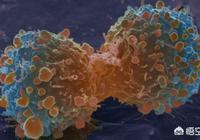 癌細胞能不能組成一個有思想的生命體?