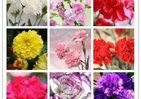 盤點60種適合庭院自種的花卉植物,快看看你認識幾種?
