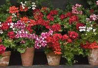 丟地上就能開滿一地的花朵,9種四季燦爛的花卉