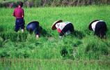 湖南衡陽農民的端午節