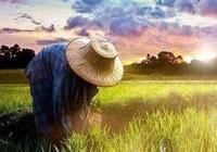 農業、農民、農村,三農問題環環相扣!拋開農業談農民,沒有結果