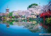 武漢磨山櫻花園,滿園子的櫻花芬芳,完美詮釋最美人間三月天