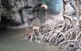 一群水獺攻擊落單猴子,猴子奮力反抗結局卻不盡人意