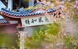 世界三大賞櫻聖地之一!很多人去過卻不知道景區第一個字怎麼讀