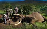 護林員在野外發現大象屍體,隨後將其象牙取走收藏