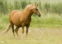 生肖馬:9月行大運,菩薩送福家財旺!你家有屬馬的嗎?