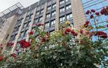 有哪座城市像杭州這麼大手筆,所有的高架都開滿了鮮花