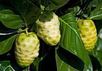 網評最難吃的5種水果,榴蓮都沒上榜,你吃過幾種?