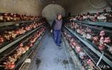心酸:雞蛋賣不出去,農村大爺為了不做虧心事,600斤雞蛋這樣處理